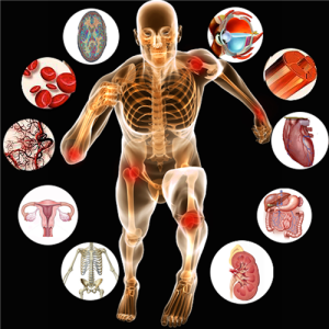 Anatomy-of-Human-Body-and-Physiology-1024x1024
